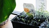 Sow 'n Sow: buy beautifully packaged flower seeds online