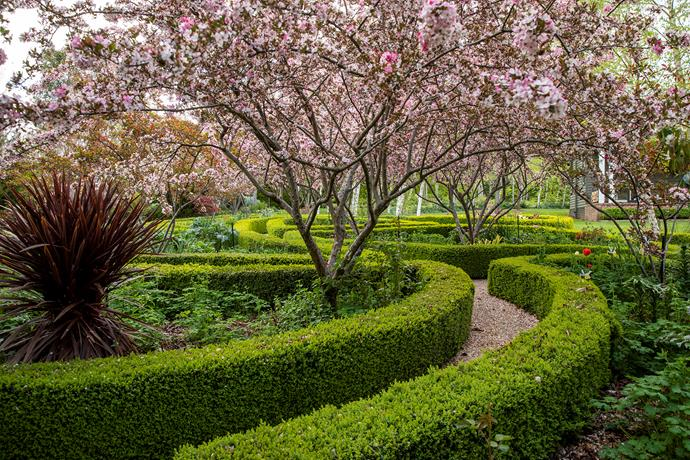 Petals from the delightful crabapple, Malus 'Strawberry Parfait' decorate the box hedges in the Crescent Parterre, which has been designed to resemble an oriental carpet in its flower colours and arrangement.