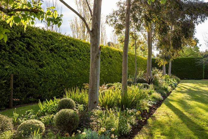 The White Borders are a great example of how to manipulate light and shade in a garden. The dark cypress hedge serves as a backdrop to the trunks of the spotted gums, Eucalyptus maculata, with the textural contrasts of foliage and flowers making an enticing carpet beneath.