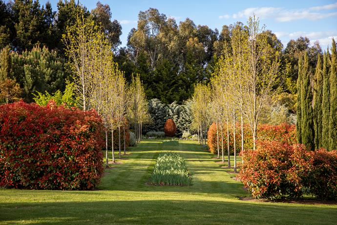 The beautifully planned axis where the vertical trunks of ash trees are interrupted by the horizontals of photinia hedges — the ash trees were chosen for their uniformity of growth and at the centre of lawn is a long rectangular bed of bearded iris.