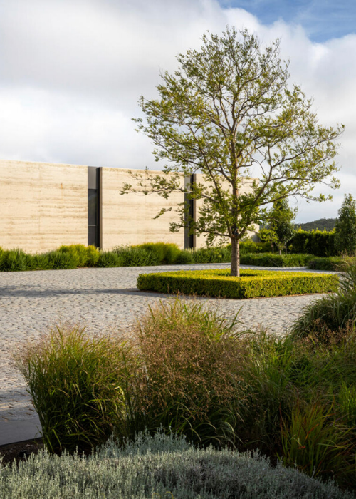 A Chinese elm bordered by Buxus microphylla shrubs takes centrestage in the amphitheatre. Panicum virgatum grass and silver-hued Leucophyta brownii shrubs soften the granite.