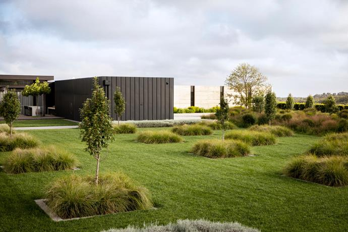 The home's contemporary architecture informs the uniformity of the planting scheme.