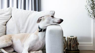 5 ways to make your home more pet-friendly