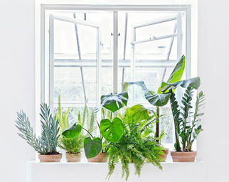 Indoor plant shelf