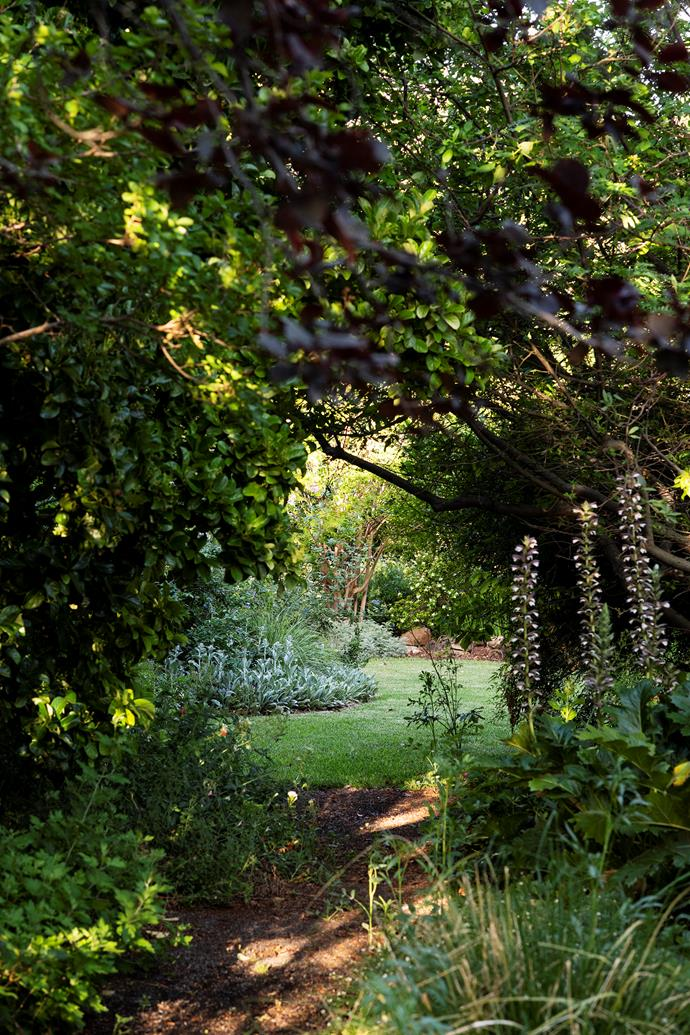 Jane Burrell has created a green oasis on her property, Woodlands, near Narrabri in NSW's north west. The Burrell family have lived here for three generations.