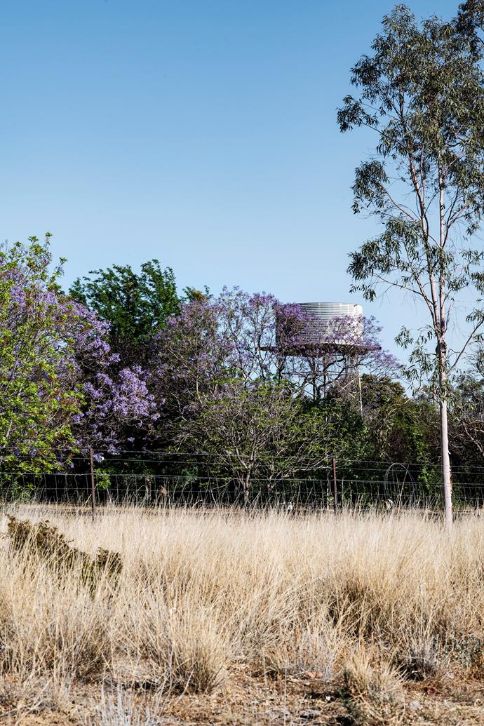 The old conifers and purple jacaranda trees screen the water tank.
