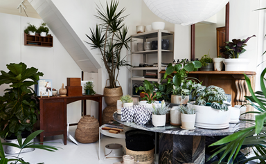 10 indoor plants you'll see everywhere in 2021