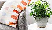 5 ways to tackle pesky indoor plant pests