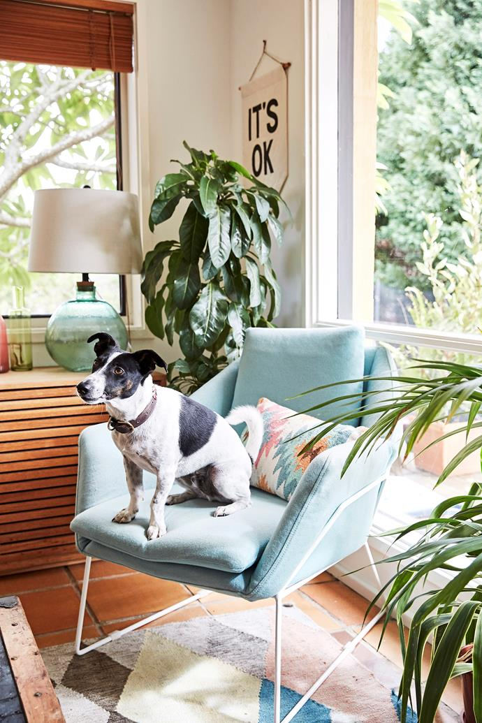 """Keep your pet away from these [6 common plants that are poisonous to pets >](https://www.homestolove.com.au/plants-poisonous-to-pets-7131 target=""""_blank"""")"""
