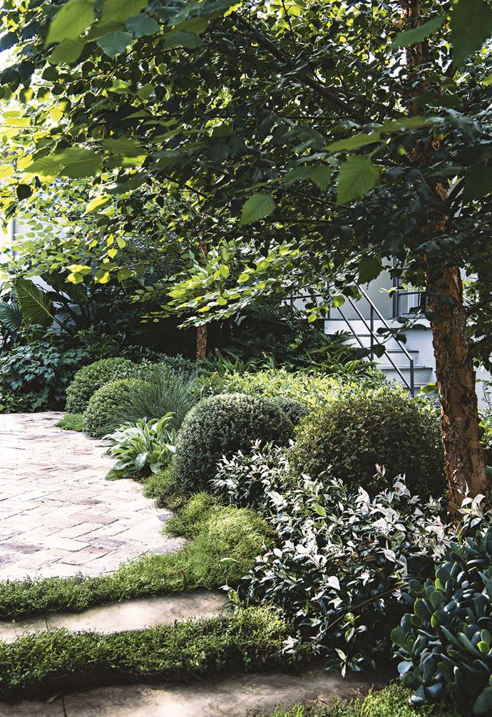 """Together, these give great contrasting colour and foliage. The crushed granite underfoot creates a nice soothing sound when walked on."" The tightly pruned topiary balls add some focal points amongst the layers. ""*Correa alba*, *Westringia fruticosa* and *Escallonia rubra* 'Red Knight' are clipped as rounds. Each plant has been carefully placed to adapt to the light conditions that vary from summer to winter.""<br><br>**Groundcover** ""The white [groundcover](https://www.homestolove.com.au/a-guide-to-groundcovers-3632