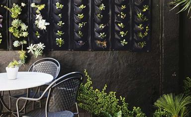 9 of the best plants for vertical gardens