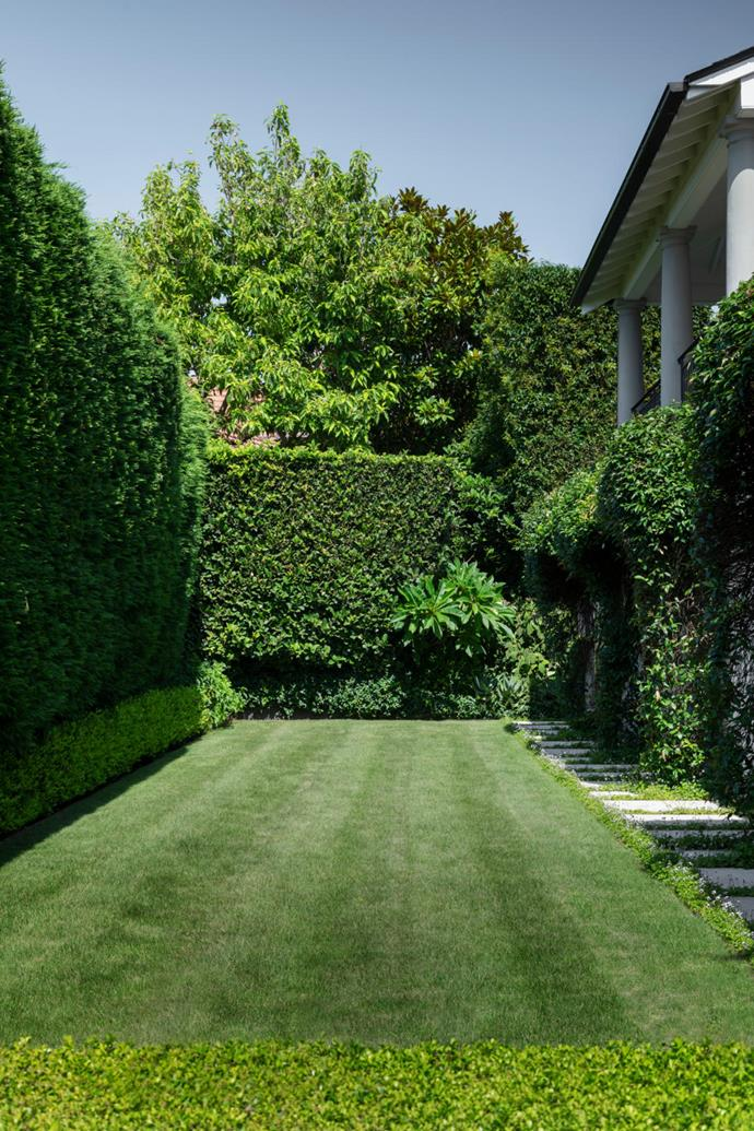 Anthony converted a sloping corner at the rear of the home into a level lawn area, creating an intimate setting where the owners can accommodate a long communal dining table for entertaining family and friends. One side of the lawn is edged with a cypress hedge (Cupressus leylandii 'Leighton Green') and a low row of Japanese box. On the other side, pretty native violets (Viola hederacea) grow between sandstone steppers. The carpet-like lawn is Sir Grange Zoysia, a delicate fine-leafed grass that is soft underfoot.
