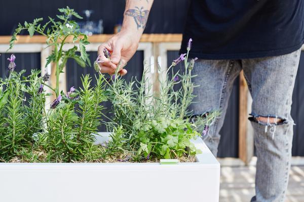 "Glowpear Urban Garden Planter - Self Watering Planter Box Kit, $199, [Green Life](https://www.greenlife.com.au/products/glowpear-urban-garden-planter|target=""_blank"")"