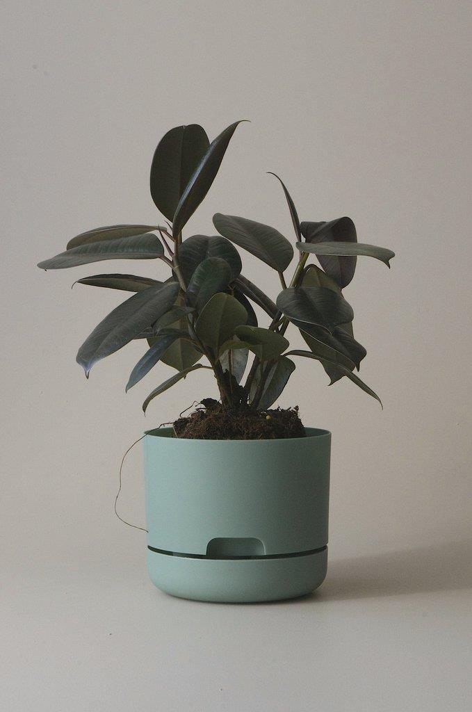 "Mr Kitly x Decor Self-watering Plant Pot in Cabinet Green (170mm), $9.50, [Mr Kitly](https://mrkitly.com.au/products/decor170?_pos=2&_sid=50528c730&_ss=r&variant=8983728259137|target=""_blank""