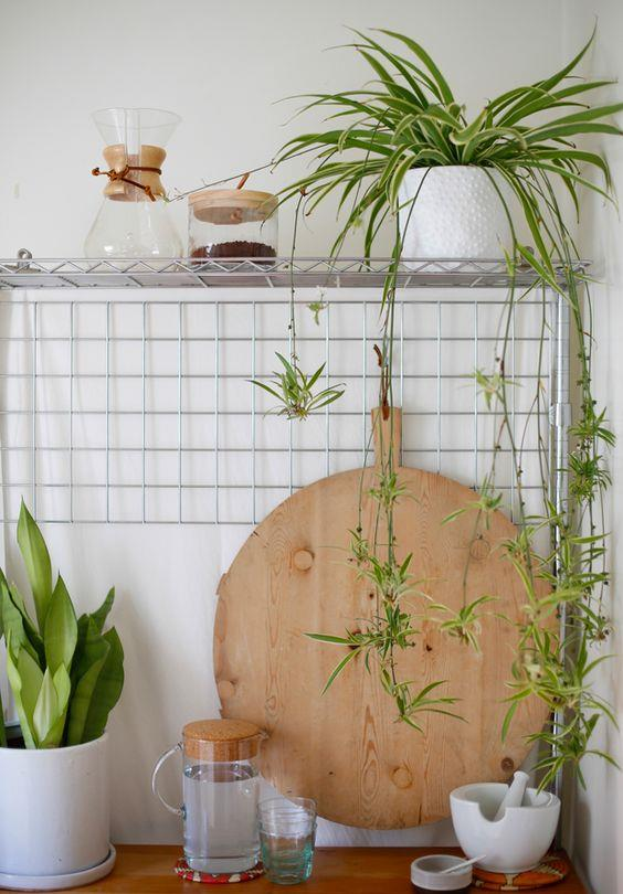 "Spider plants make [fantastic trailing plants](https://www.homestolove.com.au/trailing-indoor-plants-12481|target=""_blank"") on shelves."