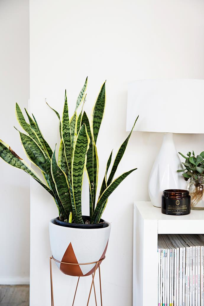 "Beloved for its sculptural shape, the snake plant is another popular [low-maintenance plant](https://www.homestolove.com.au/low-maintenance-indoor-plants-2878|target=""_blank"")."