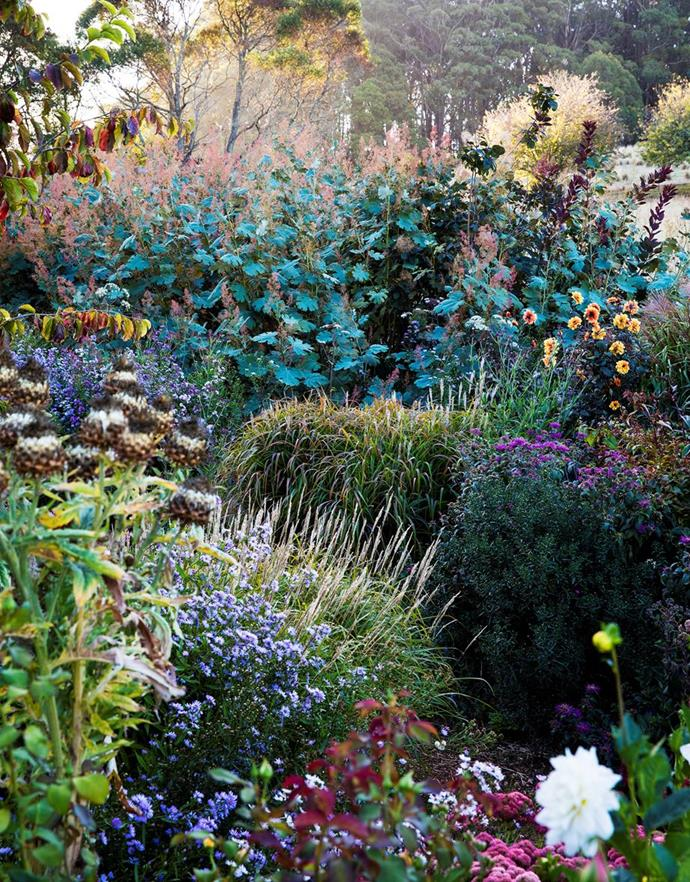 "With their large grey-green leaves and mauve wispy flowers, plume poppies (Macleaya cordata) form the backdrop to a richly textured mix of perennials that includes dahlias, asters and feather grass in this [perennial garden in NSW](https://www.homestolove.com.au/perennial-garden-nsw-19850|target=""_blank""). The spent flowerheads at left are ornamental artichoke (Cynara cardunculus). Photo: Claire Takacs 