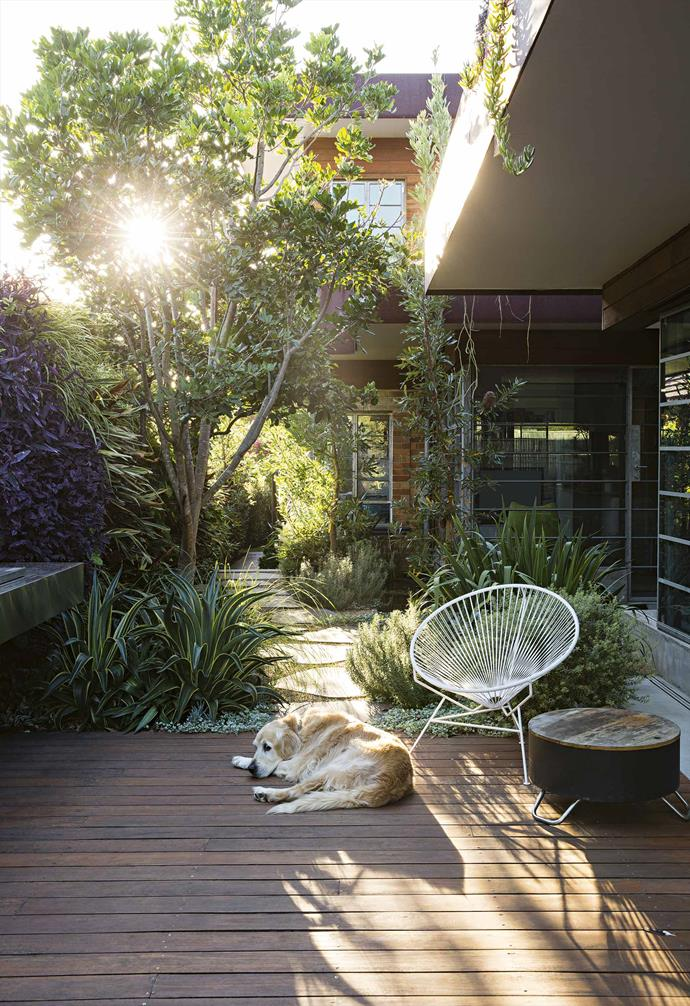 "The hub of the new garden is the [deck](https://www.homestolove.com.au/outdoor-deck-tips-14347|target=""_blank""). Steel-edged glass walls slide all the way open to link this area to the spacious living area. Where once there was a struggling lawn, edged by a hedge of lilly pilly that cramped the space, there is now a timber floor [backed by a green wall](https://www.homestolove.com.au/vertical-garden-ideas-18432