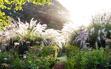 A guide to perennial plants