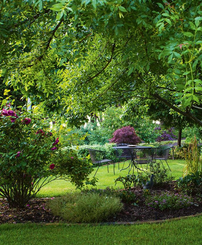 A shady corner surrounded by a purple weeping maple, David Austin roses and an 'October Glory' maple. English box domes define the corner under a dense 'Crimson Sentry' maple bordering the driveway.