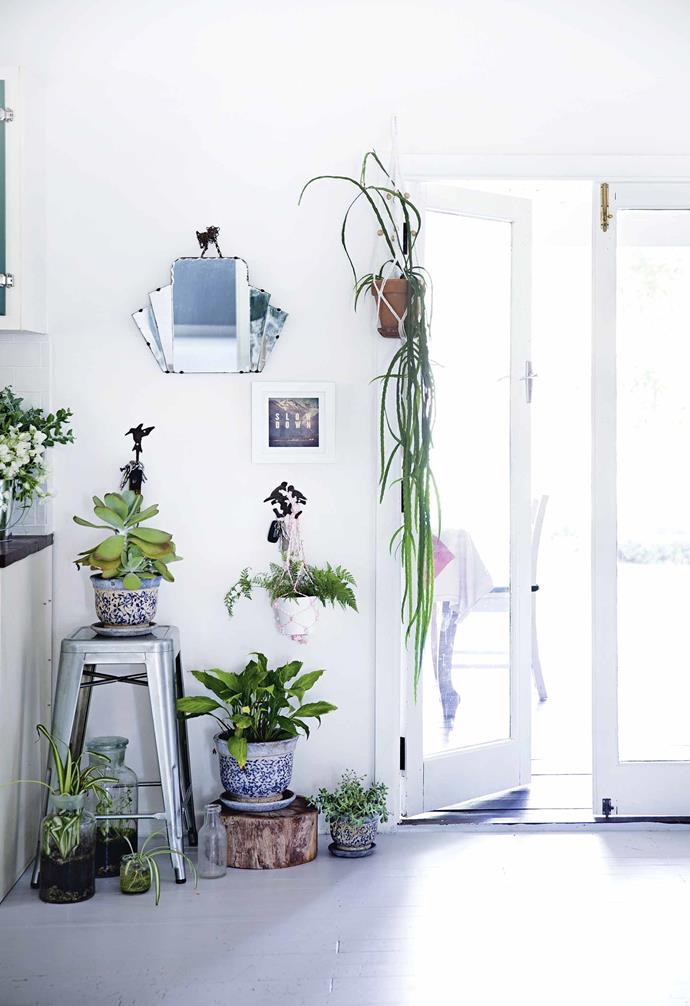 """**Create an indoor jungle**<br><br>""""I couldn't imagine my home without plants,"""" says Peta. """"That touch of nature is a must for me."""" She regularly rotates the plants near the back door of the house, depending on the season. She also keeps her sick plants here, so she can keep an eye on them.<Br><br>**Tip**: [Indoor plants](https://www.homestolove.com.au/top-15-indoor-plants-13251