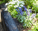 Healthy soil: Tips for improving your garden's foundation