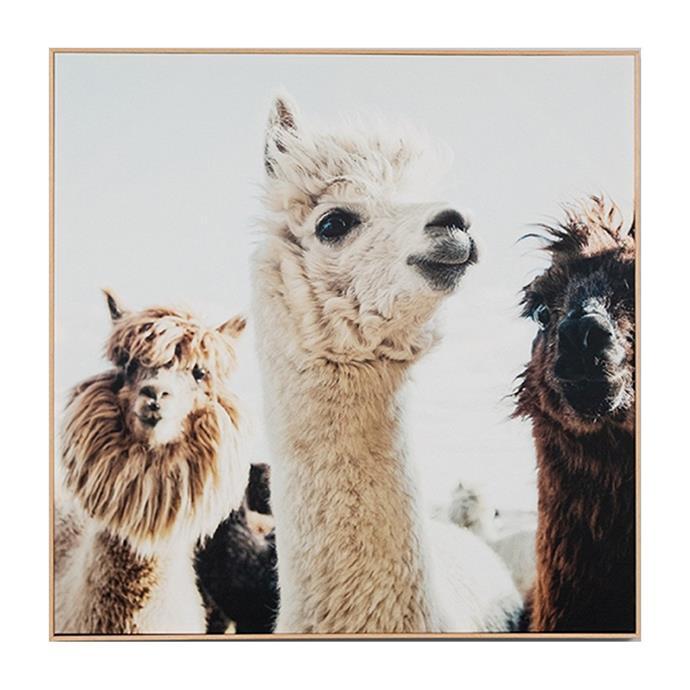 "Llama Friends Framed Canvas by Middle of Nowhere, $329, [Life Interiors](https://www.lifeinteriors.com.au/middle-of-nowhere-llama-friends-framed-canvas?gclid=Cj0KCQjwupD4BRD4ARIsABJMmZ-E3g4zTzImAzPzuWNAZnuLMGubxz4UdBbNJ61f23HFfGRjITfFoZgaAluSEALw_wcB|target=""_blank""|rel=""nofollow"")"