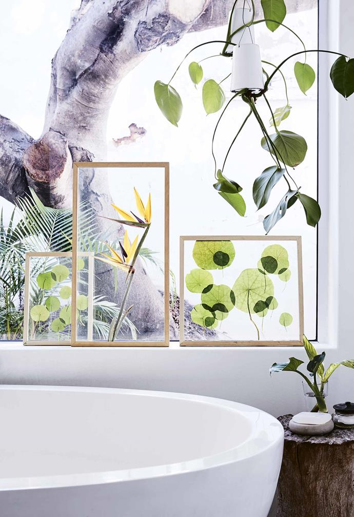 **Sunsoaked** Glass is the most obvious choice for framing but perspex can be equally effective. Pressed flowers and leaves fade with time – displaying them out of direct sunlight  will prolong their life.