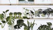How to create and display pressed leaves and flowers