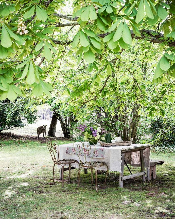 "In warmer seasons, cups of tea and meals are enjoyed under this canopy of trees on the property of a [sprawling heritage house in NSW's upper Blue Mountains](https://www.homestolove.com.au/blue-mountains-antiques-heritage-house-19177|target=""_blank""). Clearly, you don't need much to make a welcoming outdoor setting."