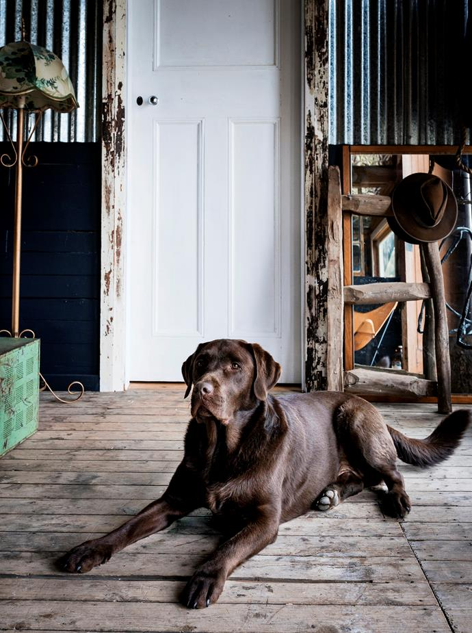 Boris loves hanging out in the Southern Wild Co headquarters.
