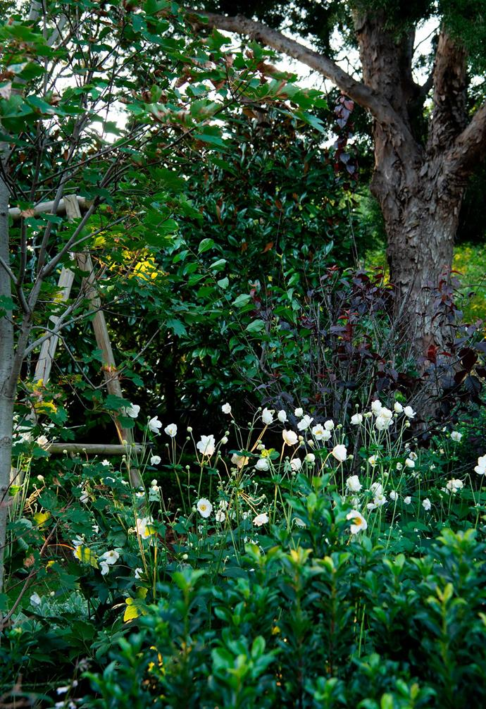 An old swing set sits beneath a Prunus tree underplanted with Japanese anemone, Indian hawthorn and Sedum 'Autumn Joy'.