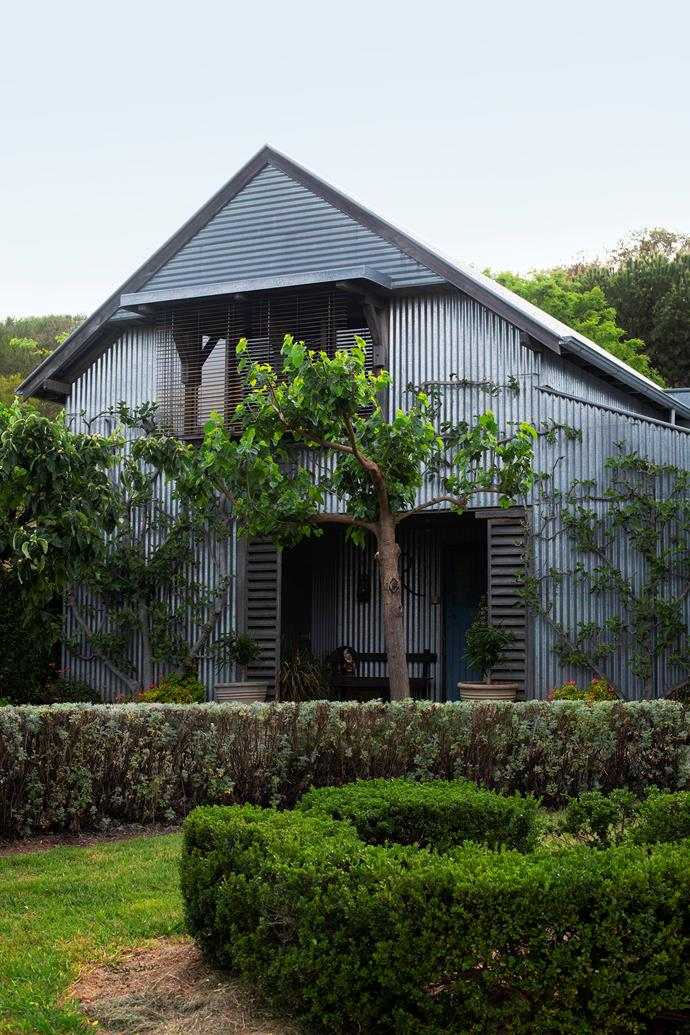 The grey foliage of the clipped wormwood hedge complements the corrugated iron on the garage.