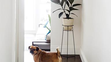 The best dog breeds for apartments and small homes