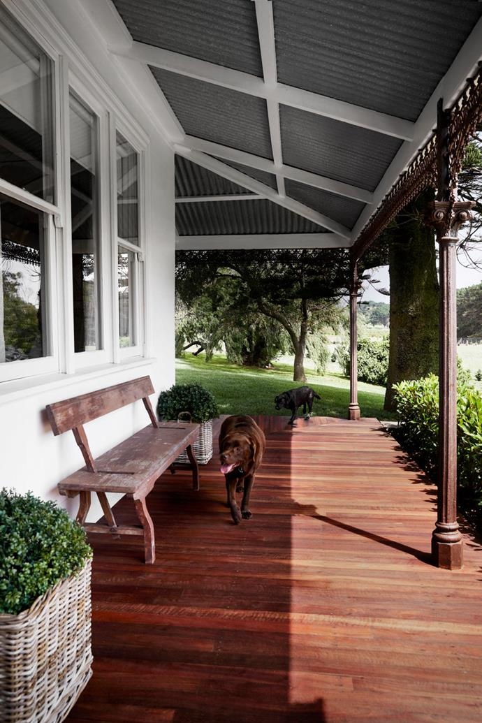 Resident labradors Milo (front) and Baci enjoy the open space as much as the owners of this heritage property, Lisa and John Zeigler. The bench is from the couple's previous home in New York. Jarrah decking. Zincalume roofing. Landscaping by Into Views.