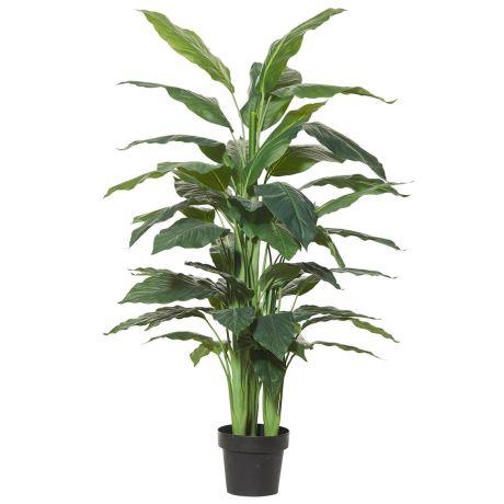 "Spathiphyllum, $169, [Freedom](https://www.freedom.com.au/decorate/artificial-flowers-plants/all-artificial-flowers-plants/23834750/spathiphyllum-146cm|target=""_blank""|rel=""nofollow"")"