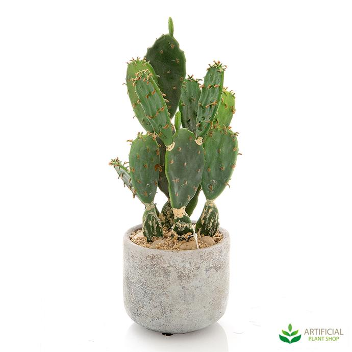 "Desert Cactus, $68.81, [Artificial Plant Shop](https://www.artificialplantshop.com.au/desert-cactus-31cm/|target=""_blank"")"