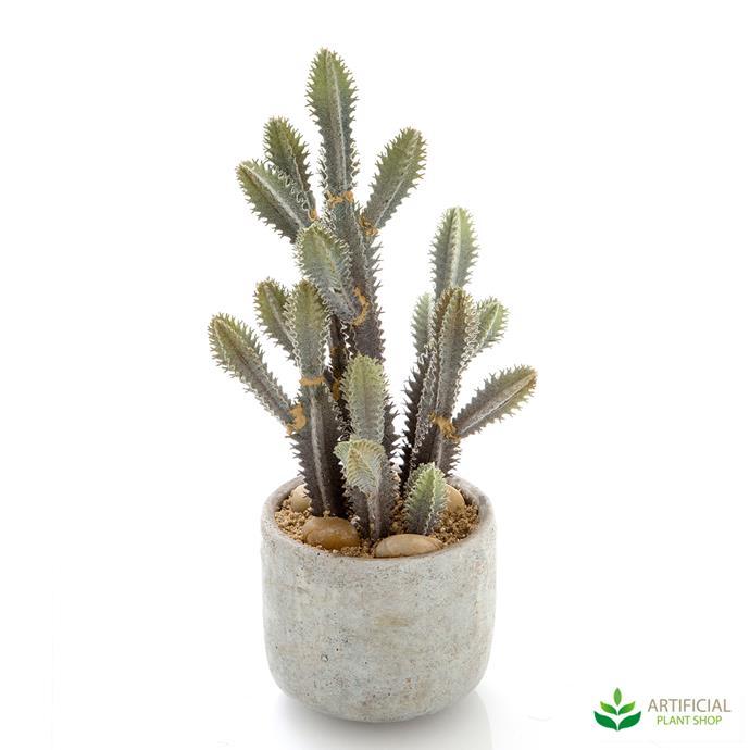 "Desert Cactus, $63.46, [Artificial Plant Shop](https://www.artificialplantshop.com.au/desert-cactus-mix-32cm/|target=""_blank""|rel=""nofollow"")"