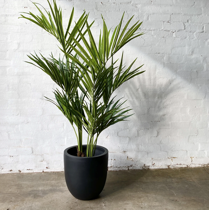 """Artificial Kentia Palm Tree, $319, [The Plants Project](https://theplantsproject.com.au/collections/all-products/products/artificial-kentia-palm
