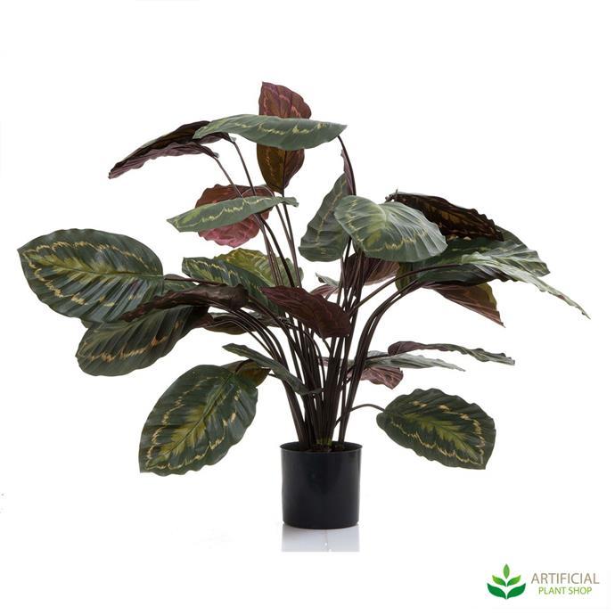 "Calathea Fasciata Green/Red, $189.98, [Artificial Plant Shop](https://www.artificialplantshop.com.au/calathea-fasciata-green-red-65cm/|target=""_blank""|rel=""nofollow"")"