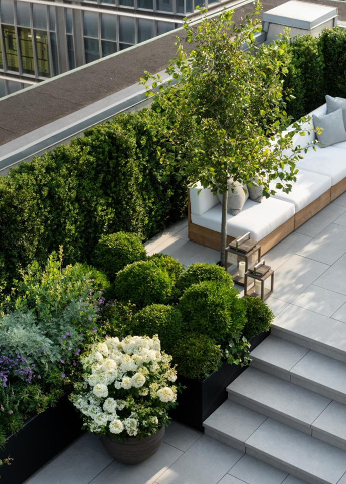 Limestone pavers nagivate the split-level layout surrounded by garden beds of shapely buxus and blooming Bobo hydrangea.