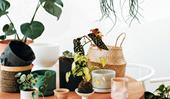 9 ways to buy indoor plants at a fraction of the cost