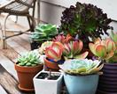 How to grow a succulent garden in 5 easy steps