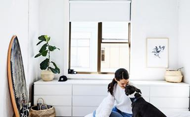How to eliminate pet hair from your home