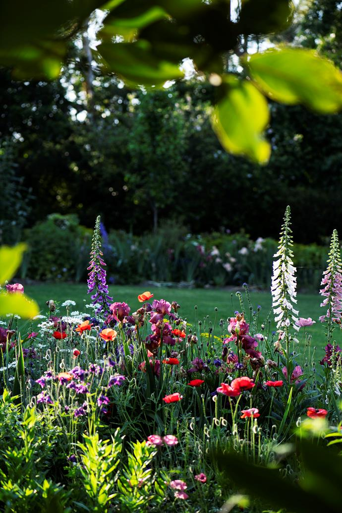 Foxgloves stand tall among a glorious confection of bright red poppies and wine-hued bearded iris.