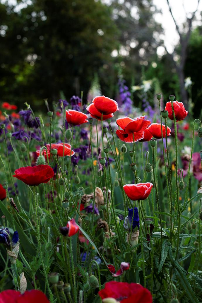 Poppies provide bursts of vibrant colour.