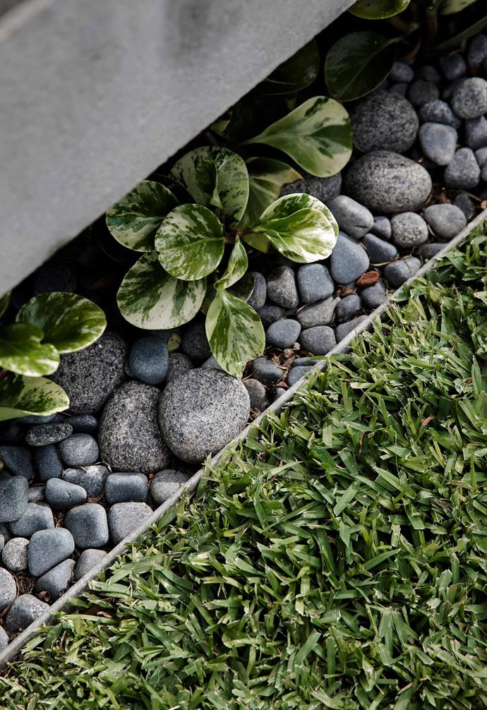 """Baby rubber plants (*Peperomia obtusifolia*) are planted beneath the pool overhang and teamed with Anvil pebbles from [Eco Outdoor](https://www.ecooutdoor.com.au/
