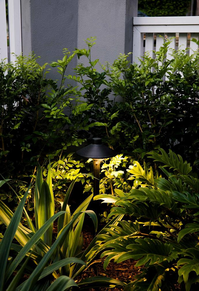 """**Shining right** """"If you want to highlight certain plants, look to lighting that's between 220 and 260 lumens,"""" adds Oliver."""
