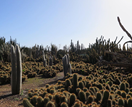 Inside the largest cactus garden in Australia