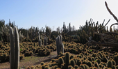 Inside the largest cactus garden in Australia